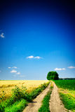 Wheat  field and country road. Stock Photos