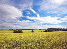 Wheat field in countryside Stock Photography