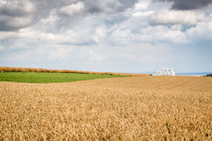 Wheat field in the countryside. In Germany stock photo