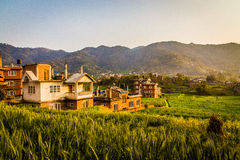 Wheat field and countryside scenery in urban area in Nepal Royalty Free Stock Photos