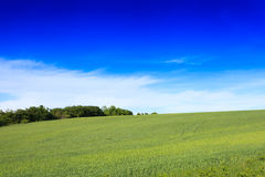 Wheat field and countryside scenery Stock Photo