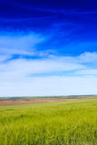 Wheat field and countryside scenery Royalty Free Stock Images