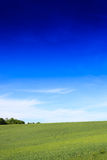 Wheat field and countryside scenery Royalty Free Stock Photo