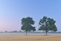 Wheat Field at Dawn Stock Photography