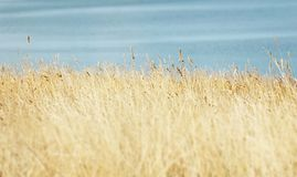 Wheat field in daylight stock images