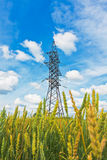 Wheat field and electrical powerlines Stock Photography