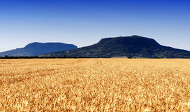 Wheat field at extinct volcanoes Royalty Free Stock Photo