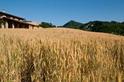 Wheat field with farmhouse Stock Photo