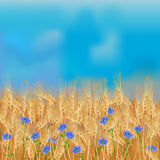Wheat field with flax flowers and blue sky Stock Photography