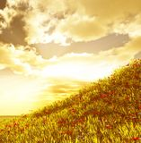 Wheat field with flowers. In the sunset Royalty Free Stock Photography