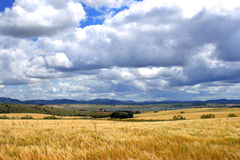 Wheat field in front of mountains, and sky with clouds background. 1 Royalty Free Stock Photos