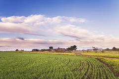 The wheat field is in front of rural houses Stock Photography