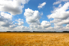 Wheat field of gold with cloudscape Royalty Free Stock Photography