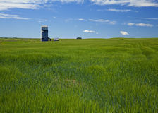 Wheat field and grain elevator Stock Photos