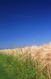 Wheat field grass background Royalty Free Stock Photography