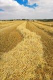 Wheat Field Harvest Royalty Free Stock Photos