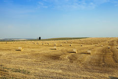 Wheat field after harvest Stock Photography