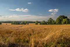 Wheat field after harvest Royalty Free Stock Photos