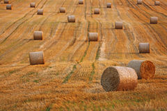 Wheat field after harvest. Royalty Free Stock Images