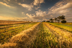 Wheat field after harvest Royalty Free Stock Images