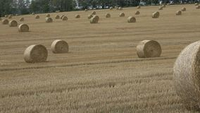 Wheat field after harvest with straw bales. stock footage