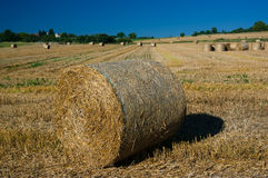 Wheat field after harvest. Royalty Free Stock Photo