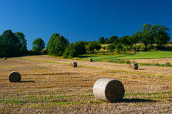 Wheat field after harvest. Stock Image