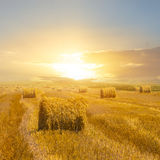 Wheat field after a harvest Royalty Free Stock Images