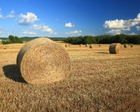 Wheat field. Harvested wheat field in eastern Missouri with straw bales Royalty Free Stock Image