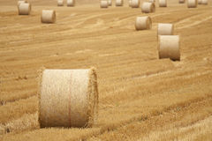 Wheat field after harvesting Royalty Free Stock Photography