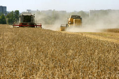 Wheat field harvesting. With agricultural machinery Stock Photography
