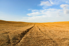 Wheat field after harvesting against a blue sky with clouds. In Val d'Orcia, Tuscany, Italy royalty free stock photos