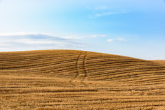 Wheat field after harvesting against a blue sky with clouds. In Val' d'Orcia, Tuscany, Italy royalty free stock photo