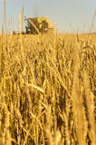 Wheat field with harvesting combine Royalty Free Stock Images