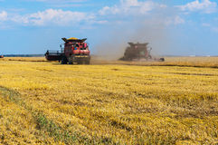 Wheat field harvesting Stock Image