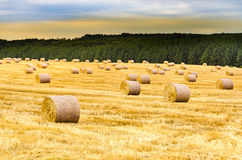 Wheat field with hay bales Royalty Free Stock Photography