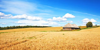Wheat field. High resolution natural landscape of wheat field Royalty Free Stock Images