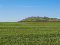 Wheat field and hill Stock Photo