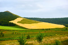The wheat field on the hillside Royalty Free Stock Image