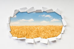 Wheat field through hole. In paper royalty free stock images