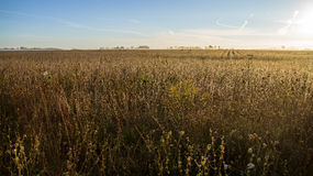 Wheat Field Horizon Stock Photography