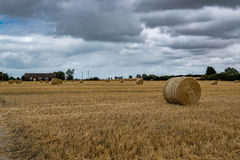 Wheat field with a house. A wheat field with a farm house in the background Stock Images