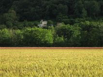 Wheat field and house Stock Photo