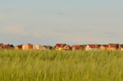 Wheat field with houses Royalty Free Stock Photos