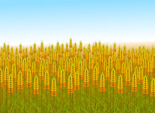 Wheat field illustration. Illustration of wheat field under blue sky close up Royalty Free Stock Photo