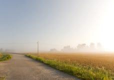 Wheat Field In Mist Stock Photo