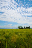 Wheat field in La Loire valley. France, with a farm in the distance and blue sky with clouds Stock Photo