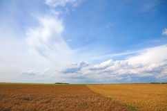 Wheat field landscape. Royalty Free Stock Photos