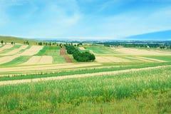 Wheat field landscape Stock Photos