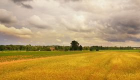 Wheat field landscape. Picture of a Wheat field landscape before storm Royalty Free Stock Images